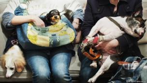 Dogs wait with their owners to receive acupuncture therapy in Tokyo