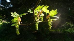 Leaves in sunshine