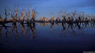 Trees are reflected in water in Epecuen,