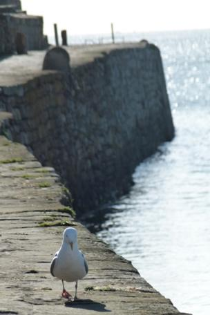Seagull on the pier