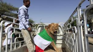 A man stands next to a lion in Hargeisa in Somaliland (18 May 2013)