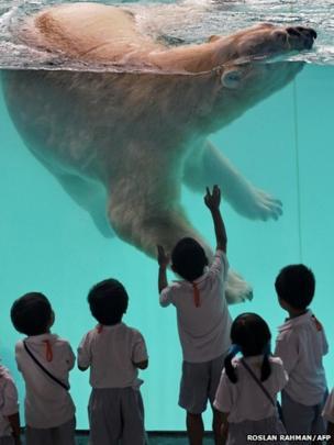 Schoolchildren watch a polar bear at Singapore Zoo