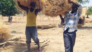 Nigerians in Cameroon carrying straw bales - Monday 27 May 2013
