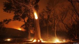 Trees burn in a wildfire near Los Angeles, California 2 June 2013