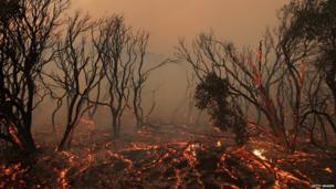 Burning trees near Los Angeles, California 1 June 2013