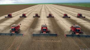 Combine harvesters crop soybeans in Brazil
