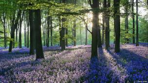 Micheldever Woods, Hampshire by Simon Byrne