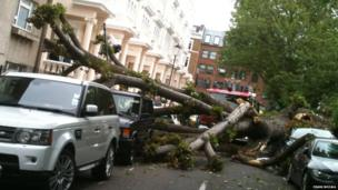 A large tree fell down unexpectedly in Colville Square Gardens