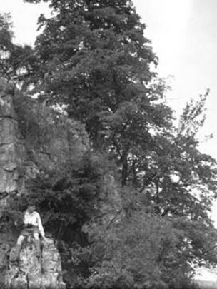 Man sat with large leafed lime, Craig y Cilau, Powys, July 1937. Photograph by HA Hyde
