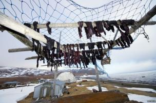 Meat on a drying platform