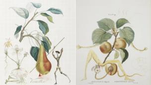 Don Quixote Pear and Apricot Knight