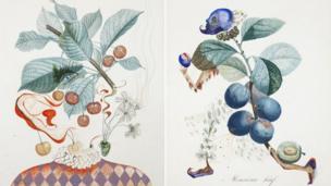 Pierrot Cherries [L] and Hasty Plum