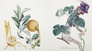 Erotic Grapefruit and Raspberry Bush