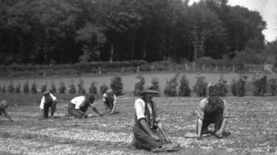 Men weeding Norway Spruce seedlings, Fairoak nursery, Tintern, Monmouthshire, 1934. Photograph by HA Hyde