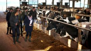 Students look at a herd of cows