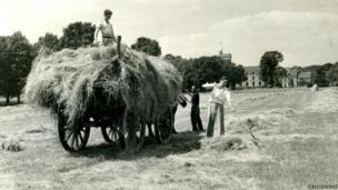 Students haymaking in 1935
