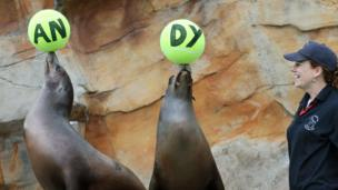 Sea lions balancing balls on their noses spelling Andy.