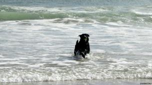 Dog running through surf