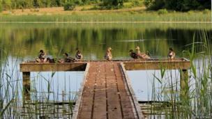 Ducks sunbathing