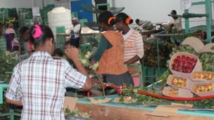 Women packing roses