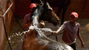 Horse trainers washing a horse at a race track in Durban, South Africa - Saturday 6 July 2013