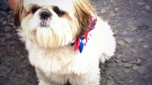 Pets also get into the spirit of the Twelfth, as Lillie the dog wears a red white and blue collar.