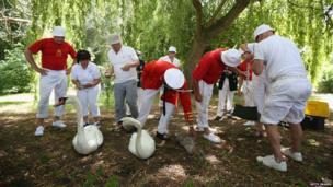 Swan Upping Census 2013