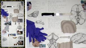 Nervous Tissue Note Panel by David Marron