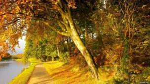 River Wansbeck and trees