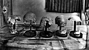 Skull remnants