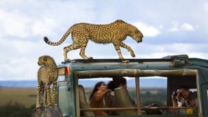 Third prize image of cheetahs taken by Yanai Bonneh