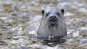 Otter / Andy Rouse / 2020VISION