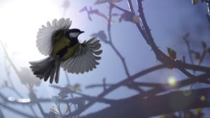 Undated handout photo issued by the British Wildlife Photography Awards of a great tit in flight by James Amess which won the Wildpix Young People's 12-18 Award in the British Wildlife Photography Awards 2013. Photo Issue date: 2 September 2013