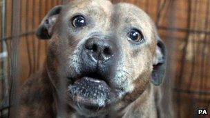 dog seized in a london raid