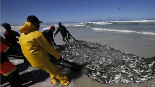 Fishermen haul in their catch on Cape Town's Sunrise Beach on 12 September 2013