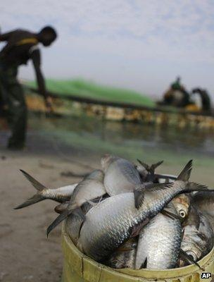 Fisherman landing his catch (Image: AP)