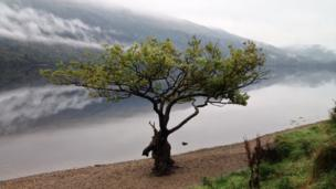 Tree on the banks of Loch Lomond
