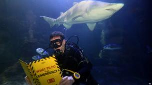 Diver and a shark