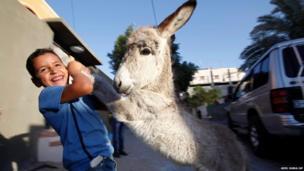 A Palestinian boy plays with a donkey