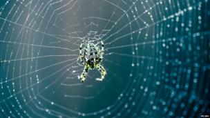 A garden spider sat in its web