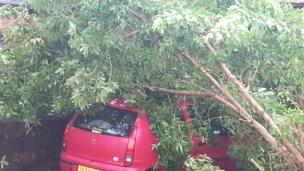 A red car is partially hidden by a fallen tree. Photo: Swades