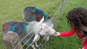 Eva feeding tartan sheep