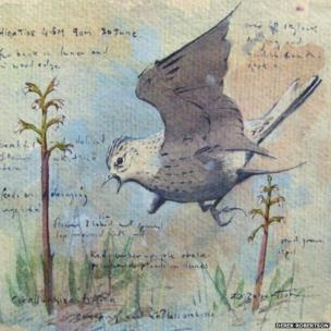 Skylark and orchids