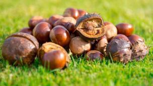 Chestnuts - by Deirdre Gregg
