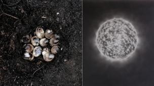 (L-R) Burnt Eggs in Nest by Gawain Barnard: and Chrysalis 1 by Ian Hodgson
