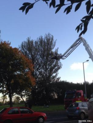 A tree with a hydraulic lift next to it. Photo: Rachel Hill
