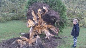 Boy looking at fallen down tree