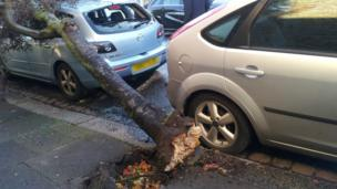 A tree on top of a small silver car. The rear window of the car has smashed.