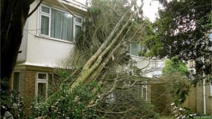 Tree leaning on house in Bournemouth