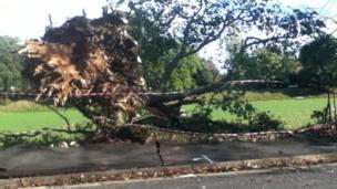 Fallen tree in St James' Park, Southampton